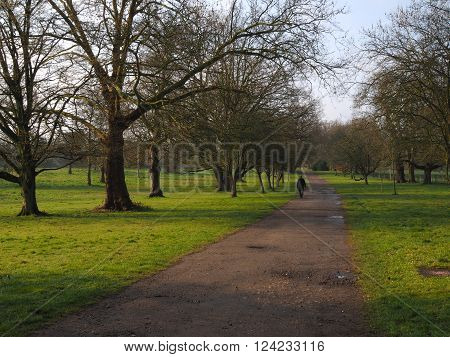 Person walking through a tree lined park