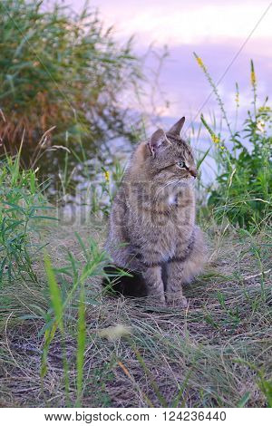 sitting on a dry grass wildcat on a background of lake
