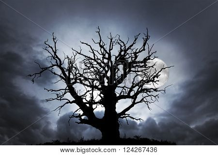 silhouette of spooky bare oak tree on dark sky with full moon