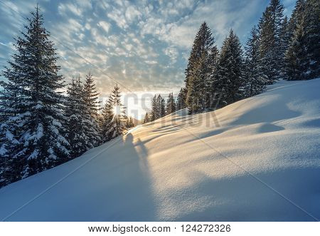 sunbeams thtough tree at winter mountain meadow in austria