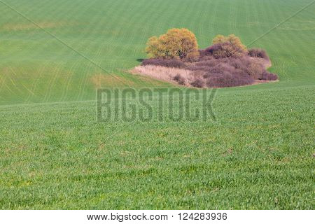 perfect spring scenery,green field with beautiful island
