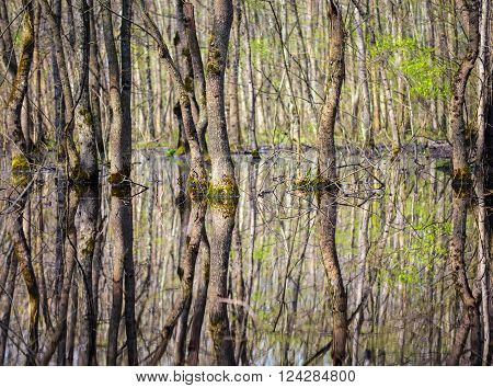 Forest In The Swamp