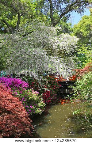 Flowering plants and trees in a colorful garden setting