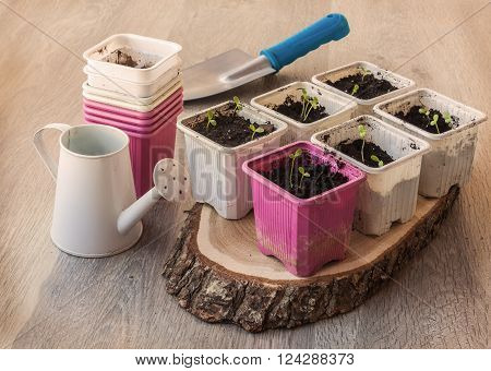 Seedlings of flowers in pots on a wooden table