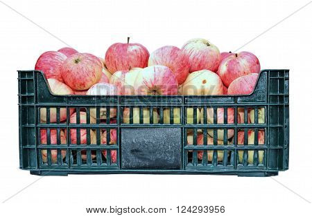 Yellow and red apples in a plastic box isolated