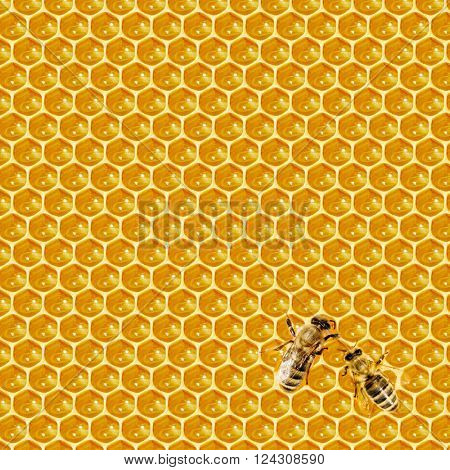 Close up view of the working bees on honeycells.
