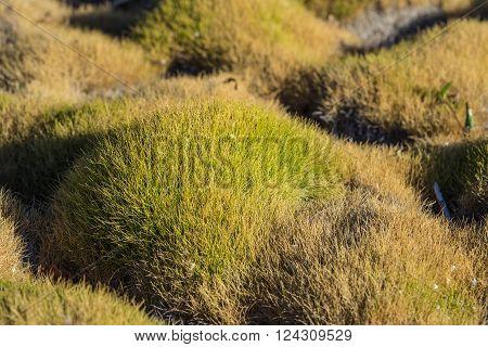Green Blades Of Garden Grass