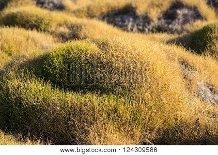 Calm Blades Of Korea Grass