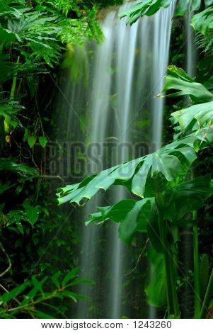 Waterfall In The Rainforest