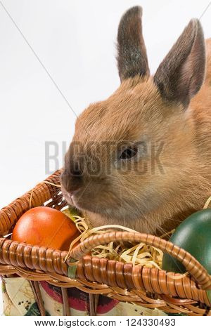 Easter Bunny And Basket With Easter Eggs