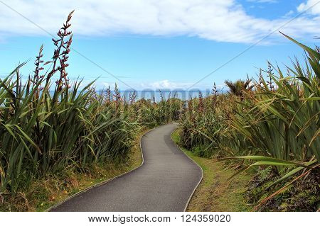 Pathway through spiny spaniards in Pancake rock, Greymouth, New Zealand