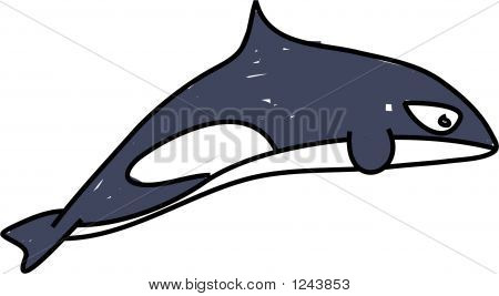 killer whale isolated on white drawn in toddler art style poster
