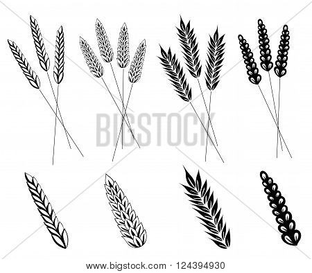 Vector set with cereal, wheat and barley.