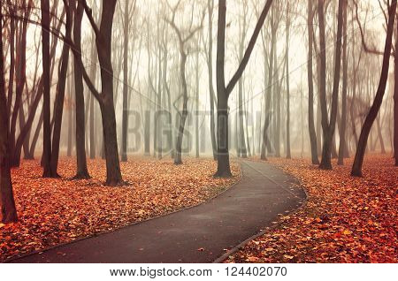 Lonely walkway in the autumn desrted park in the fog - picturesque landscape. Vintage and creative filter applied