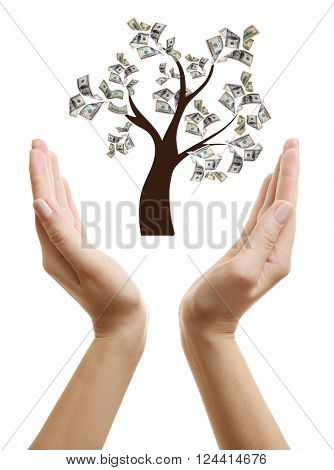 Financial success concept. Money tree growing on human hand isolated on white