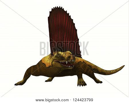 Dimetrodon Reptile 3D illustration - Dimetrodon was a mammal-like sailback reptile that lived in the Permian Period of North America and Europe.