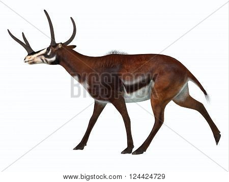 Kyptoceras Side Profile 3D illustration - Kyptoceras was a antelope type mammal that lived in North America during the Miocene to Pliocene Periods. poster