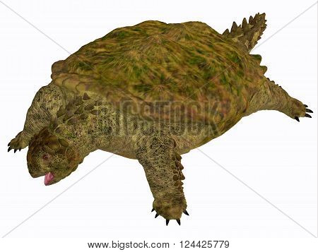 Proganochelys Turtle Body 3D illustration - Proganochelys is the second oldest turtle species discovered and lived in Germany and Thailand in the Triassic Period.