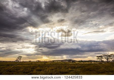 Safari car with tourists driving at the savannah one beautiful and warm evening with dramatic clouds in Serengeti Tanzania, Africa.