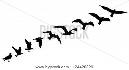 Bird silhouette fly off concept. Vector illustration