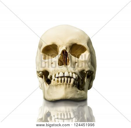Human skull photographed in isolation on a white background