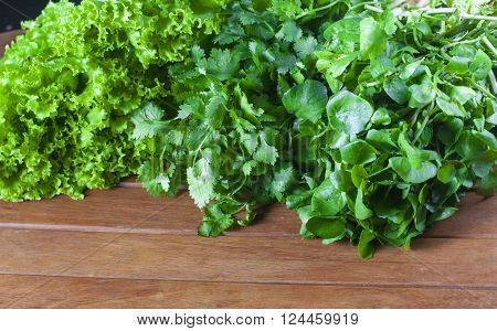 Green Fresh Salad