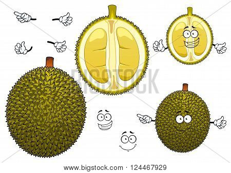 Thai exotic durian fruit with spiny dark green peel with segmented soft and mushy yellow flesh. Ripe fruit for dessert recipe, vegetarian healthy dessert menu or tropical cocktail design