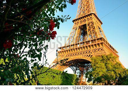 Eiffel Tower and flower in garden in Paris