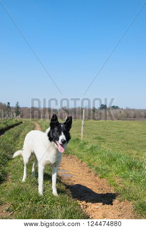White dog standing in nature landscape
