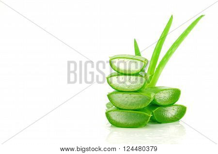 Slice Aloe Vera (Aloe barbadensis Mill.Star cactus Aloe Aloin Jafferabad or Barbados) a very useful herbal medicine for skin care and hair care.