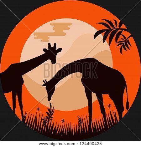 Giraffes in the Savannah at Moonlight.Vector Illustration