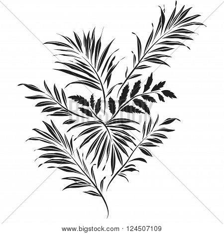 Palm leaves. Black silhouette on white background. Vector illustration