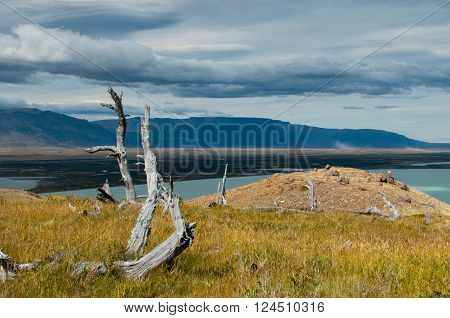 Dead tree in deserted Patagonia Argentina. Lake Viedma in Los Glaciares national park