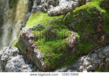 close up green moss on stone and daylight