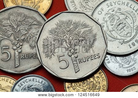 Coins of the Seychelles. Coconut palm (Cocos nucifera) depicted in the Seychellois five rupee coin.