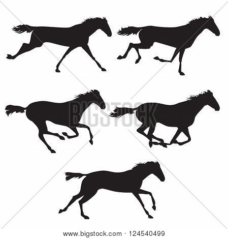 Collection of horse race horse jump and horse run. Silhouettes of horses. Black horses on isolated background. Set of wild horses. Vector horse collection