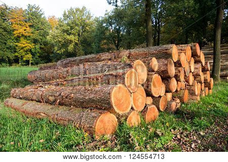 Chopped wooden Logs stacked in a forest