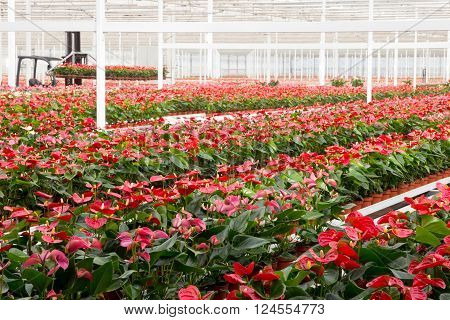 Cultivation Greenhouse