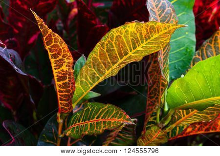 Closeup Photo Of Colorful Wild Tropical Leaves