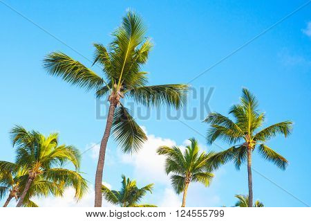 Palm Trees Over Blue Cloudy Sky