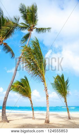 Palm Trees Grow On Empty Sandy Beach