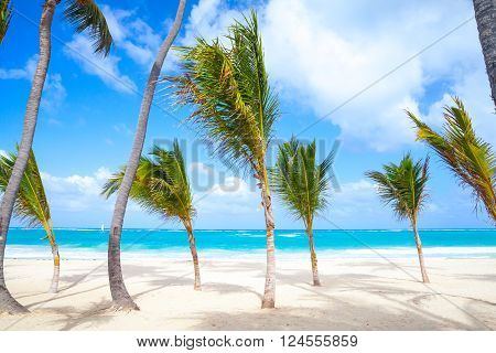 Small Palm Trees Grow On Empty Sandy Beach