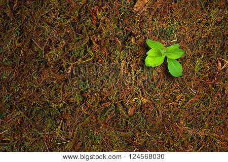 Ecology concept. Rising sprout of old moss and symbolizes the struggle for a new life