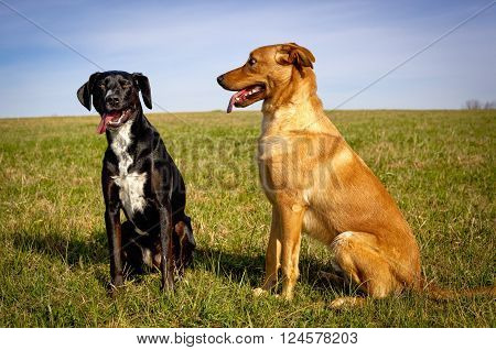 Two sweet dogs sitting next to each other in green grassy field