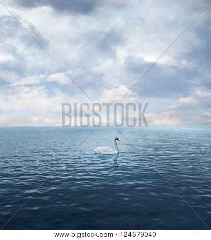 Single isolated swan