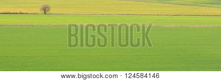 Beautiful Landscape Background, Green Fields And Tree