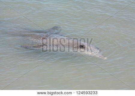 Beautiful Monkey Mia, Shark Bay, Western Australia