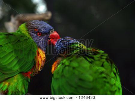 Bird Kiss