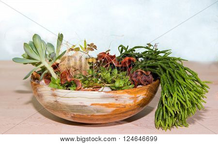 Succulents planted in a bowl from onyx stone with copy space.