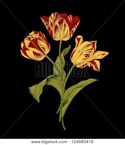 Bouquet of three red and yellow tulips on black background. Vector vintage element for design in the style of European botanical illustrations of the 19th century.